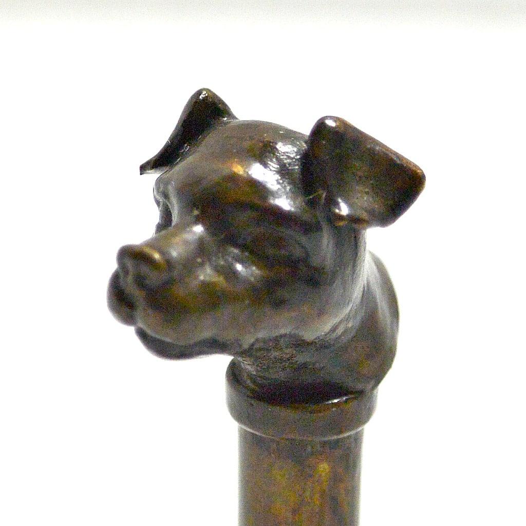 bronze Jack Russell Terrier